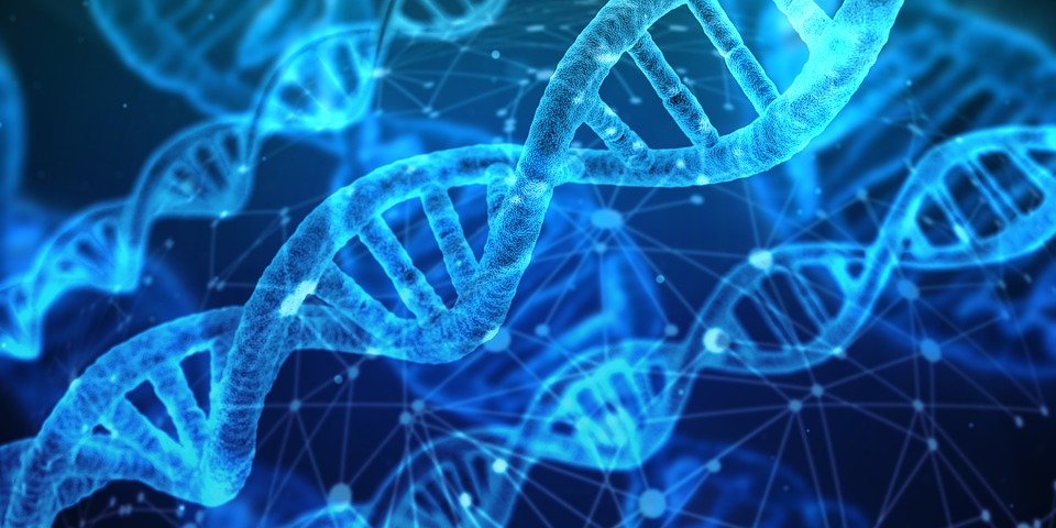 DNA Test While Pregnant - Information Glue